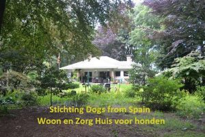 Stichting Dogs from Spain