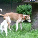 Stichting Dogs from Spain - Rapid 10