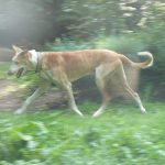 Stichting Dogs from Spain - Rapid 14