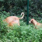 Stichting Dogs from Spain - Rapid 3