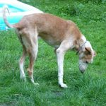 Stichting Dogs from Spain - Rapid 6