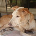 Stichting Dogs from Spain - Rapid 7