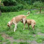 Stichting Dogs from Spain - Rapid 9